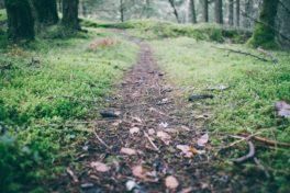 Naturweg durch einen Wald