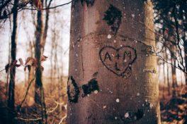 Baum mit reingeritzten Anfangsbuchstaben im Herz
