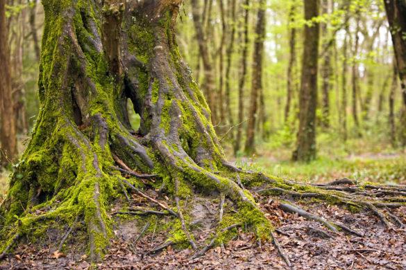Wurzeln Baum Wald