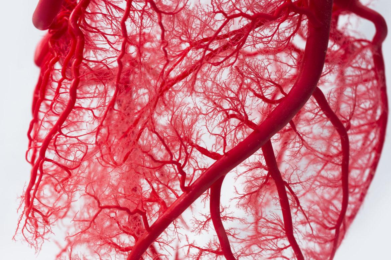 Blutgefässe Herz freigelegt_Herz