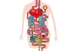 Körper Organe Leitungen