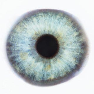 Auge Iris Pupille