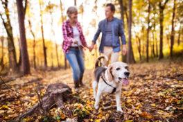 Ein älteres Parr geht im Wald mit einem Hund spazieren.