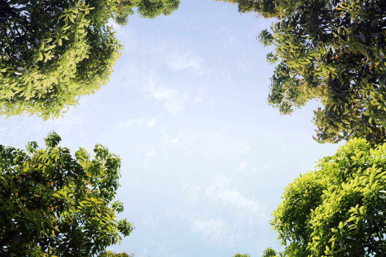 Bäume Lichtung Blick nach oben
