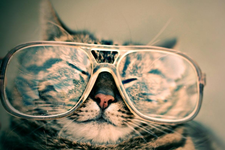 Katze Brille