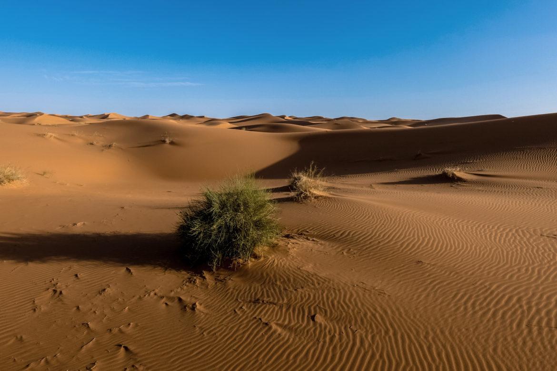 Busch in Wüste