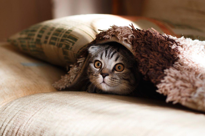 Kätzchen das sich unter einer Decke versteckt.
