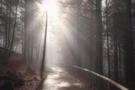 Sonne scheint über Waldweg mit leichtem Nebel