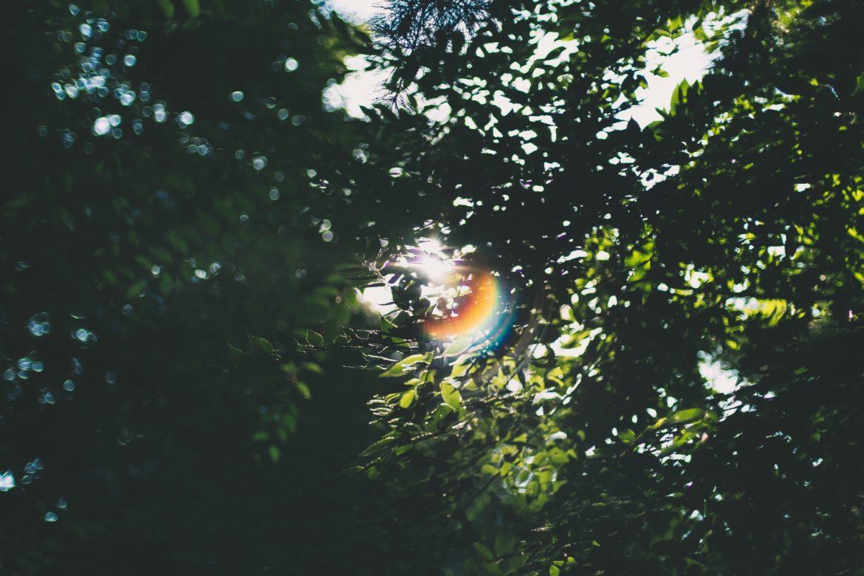 Die Sonne schein zwischen einem Blätterdach durch und bildet einen Regenbogen.