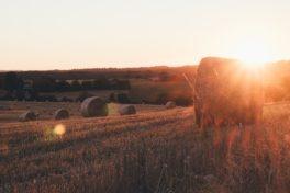 Ein Feld mit Strohballen bei Sonnenuntergang.