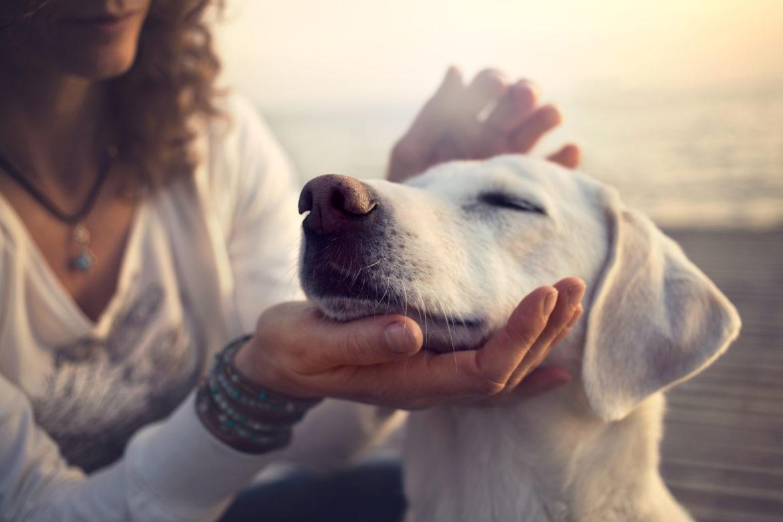 Eine Frau hält den Kopf eines weissen Labradors in der Hand und streichelt den Hund am Strand und Meer.