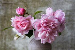 Rosarote Rosen in einer braunen Steinvase
