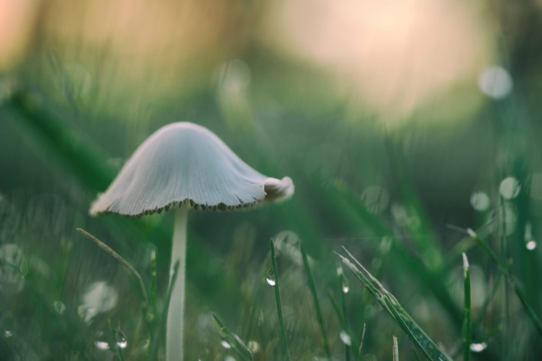 Ein Pilz im nassen Gras.