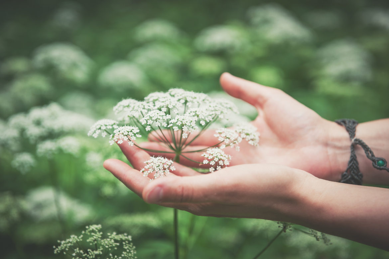 Hände an Pflanze