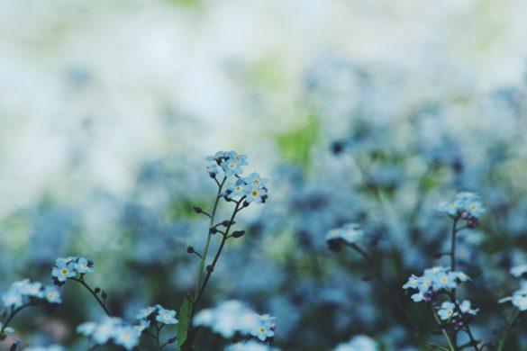 Pflanzen-Alzheimer