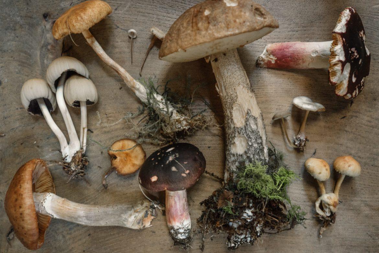 Verschiedene Pilze