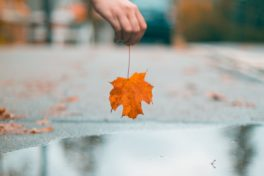 Hand hält Blatt, Laub über eine Pfütze, Herbst