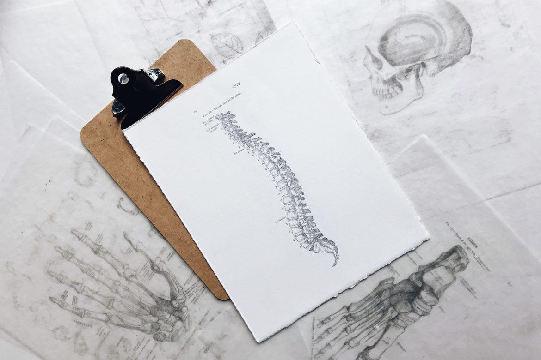Skizze von Rücken