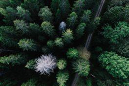 Wald von oben mit Strasse