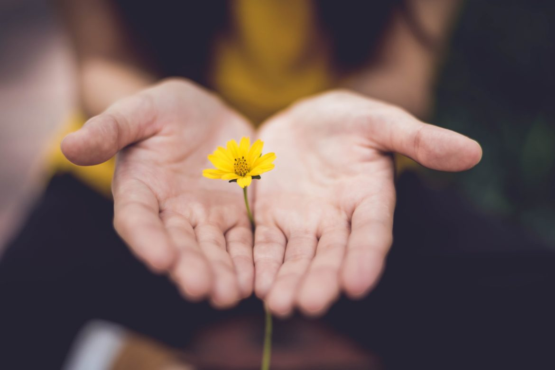 Blume in Hand