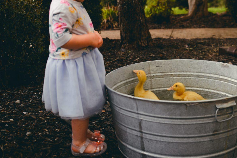 Kind mit Enten