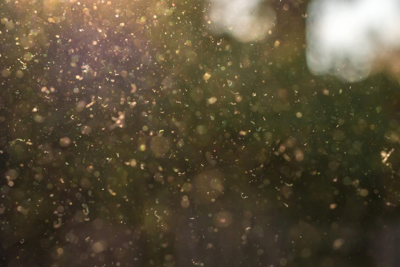 Pollen in der Luft im Gegenlicht