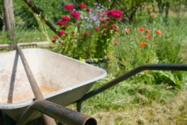 Schubkarre im Garten