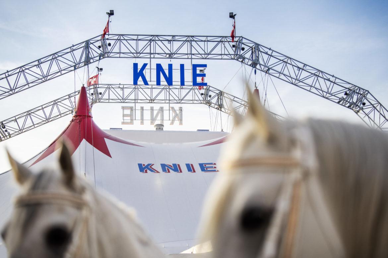 Circus Knie mit Pferden