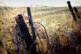 Zaun vor Feld