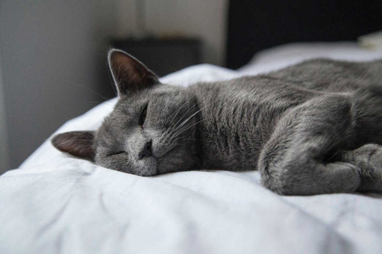 Katze schläft auf Bett