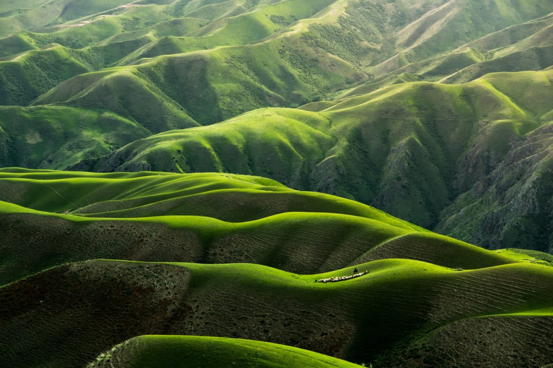 Wald, Hügel, grün, Sonnenstrahlen, Tal